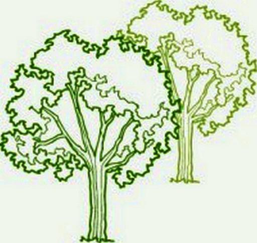 Græs og beplantning
