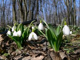 Mod forår og lysere dage