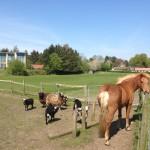 Kontakt – Dyr på eng