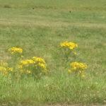 Engens Fauna og Flora